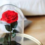 Rosa-stabilizzata-in-campana-di-vetro