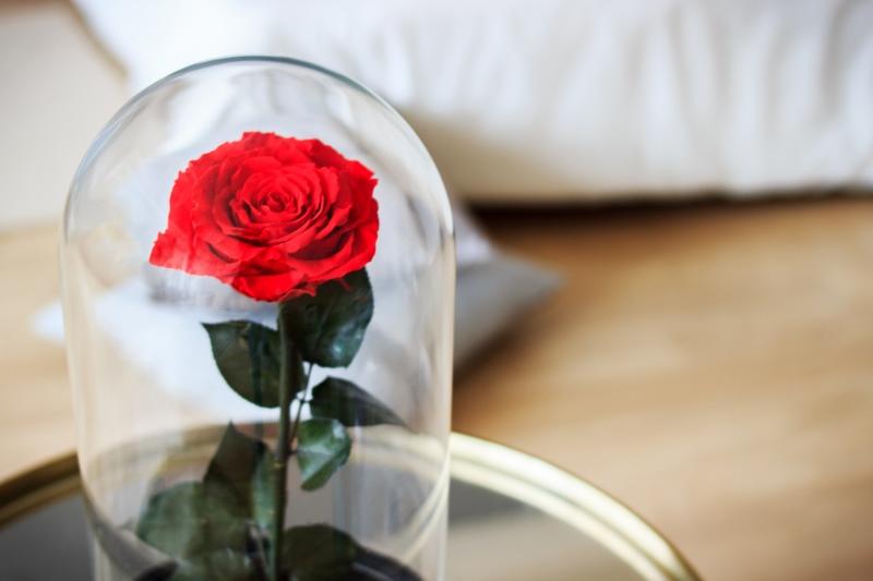 Rosa stabilizzata in campana di vetro